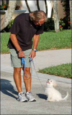 Dog Training Boca Raton Fl Puppy Trainers In Delray Beach