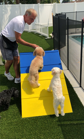 Dog Obedience Training Boarding West Palm Beach