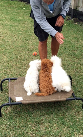 Puppy And Dog Obedience Trainers Boca Raton Puppy